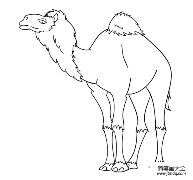 简单的骆驼怎么画|卡通骆驼怎么画