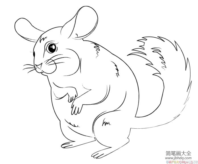 卡通南瓜_卡通南美洲栗鼠怎么画