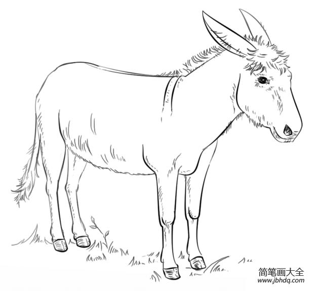 [画一头大象]如何画一头驴