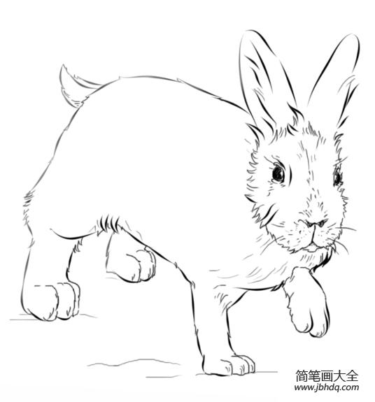 怎么画兔子|如何画兔子