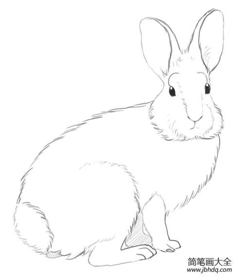 [如何画小兔子 百度影音]如何画小兔子