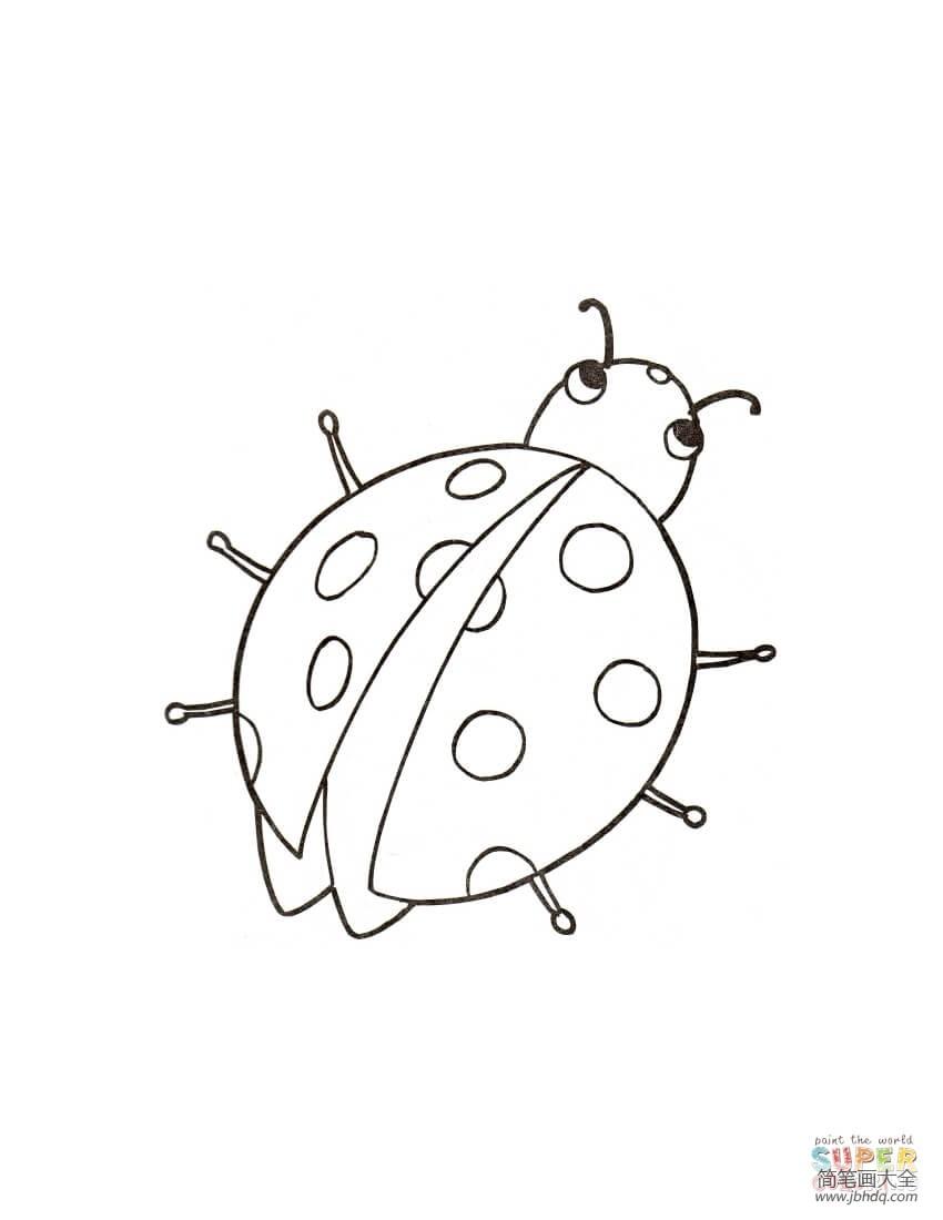 可爱的小瓢虫作文_可爱的小瓢虫