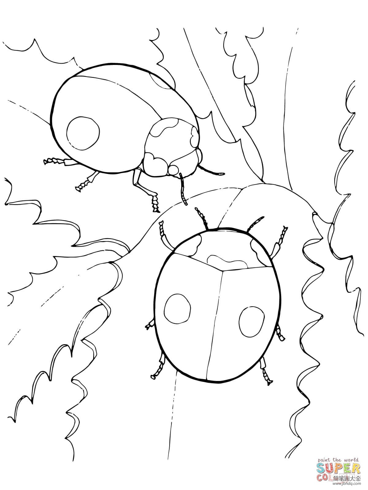 两只瓢虫简笔画图片