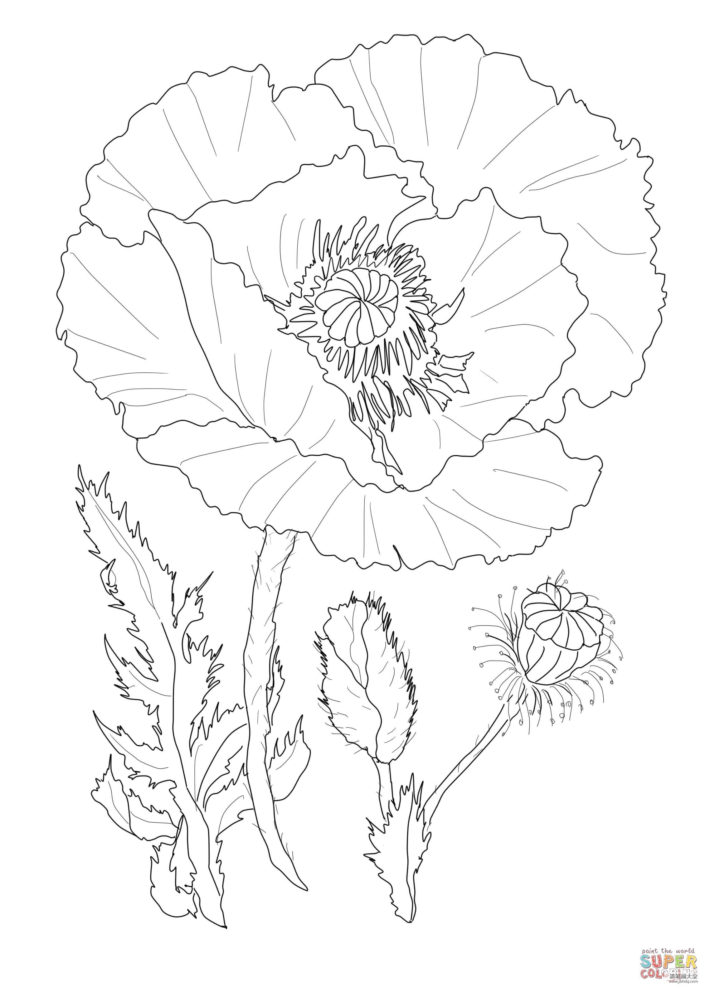 罂粟花的画法