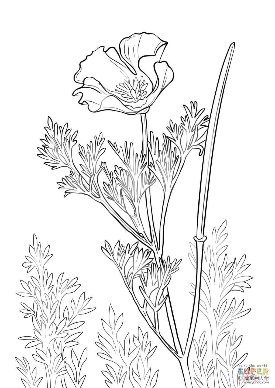 花朵画法大全 罂粟花