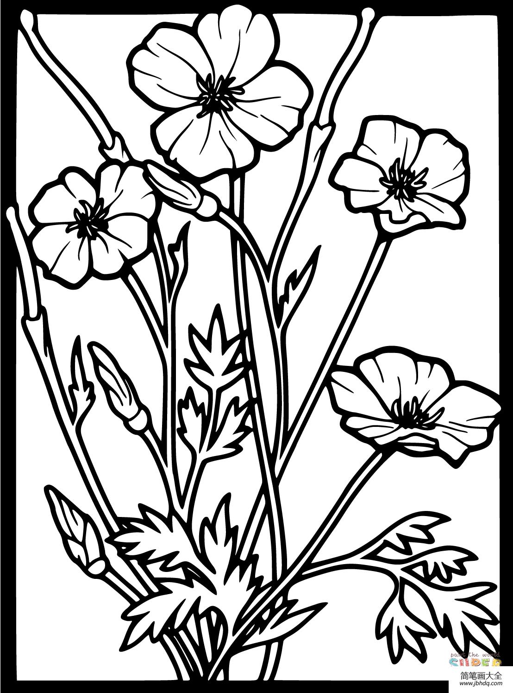 简单的罂粟花画法