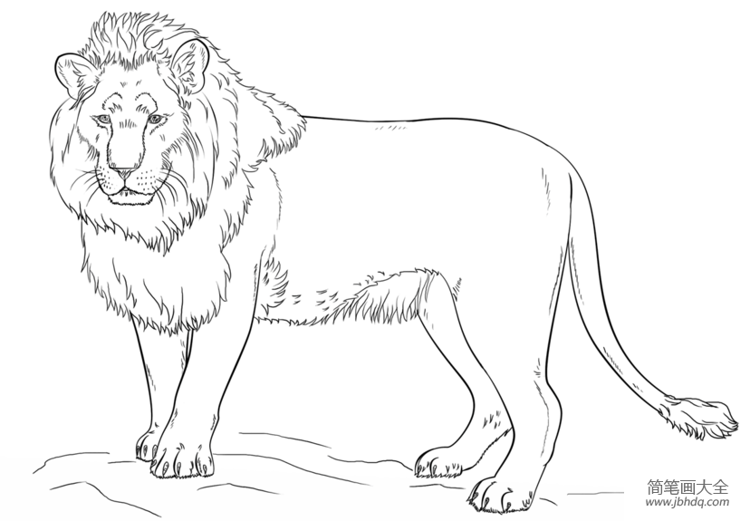 如何画公狮子