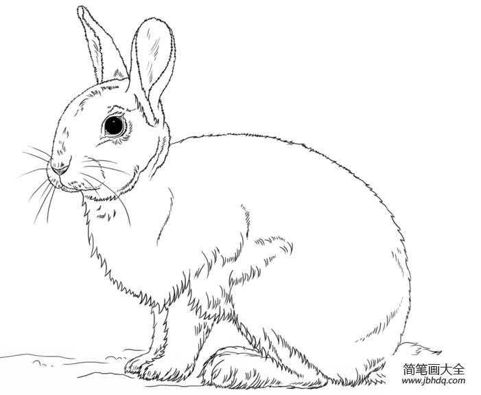 怎么画兔子_如何画兔子