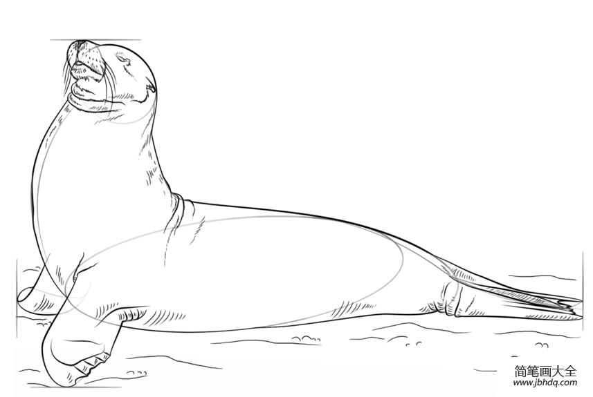 如何画海狮