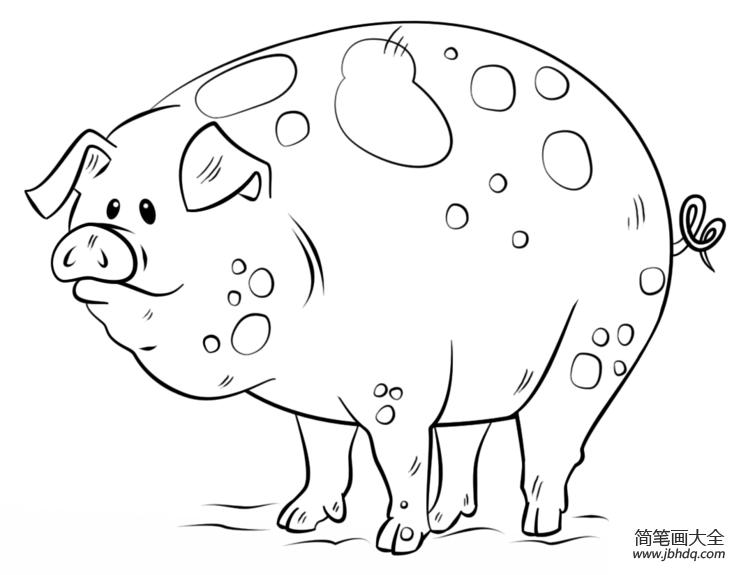 卡通猪图片简笔画_如何画卡通猪简笔画