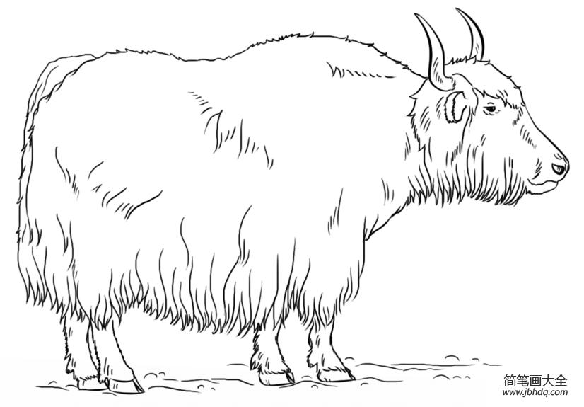 牦牛简笔画图片大全|如何画牦牛简笔画