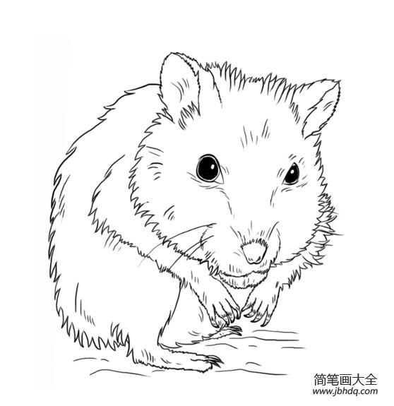仓鼠怎么画简笔画_如何画仓鼠简笔画