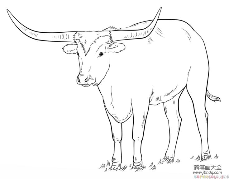【如何画好简笔画】如何画长角牛简笔画