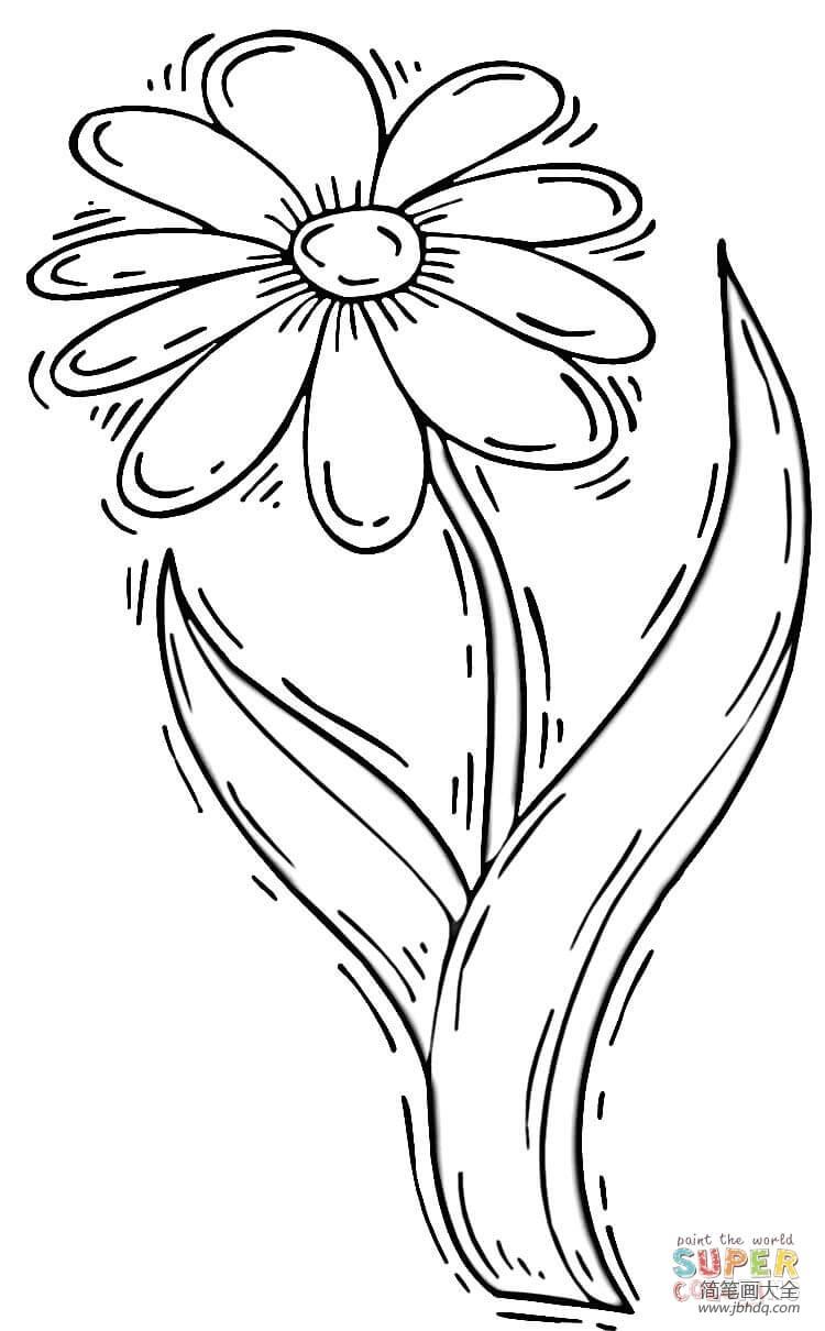 简单的菊花画法视频_简单的菊花画法