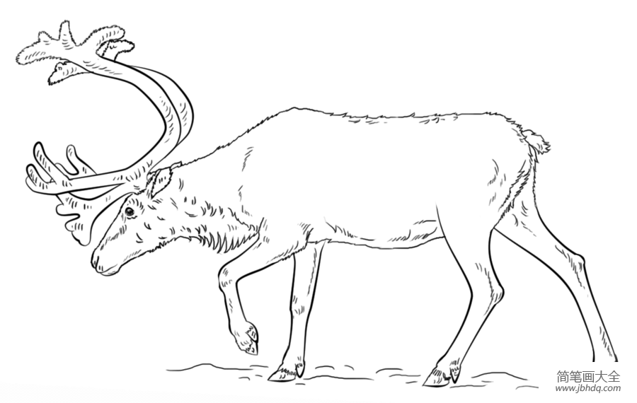[驯鹿图片 简笔画]如何画驯鹿简笔画