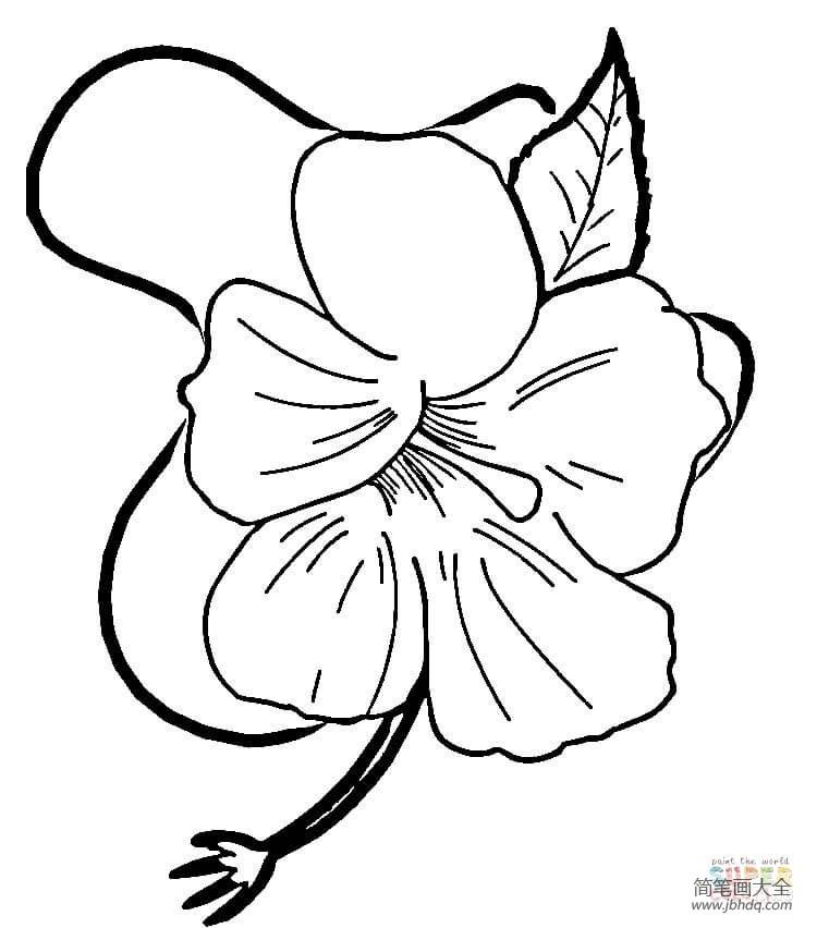 漂亮的符号|漂亮的芙蓉花
