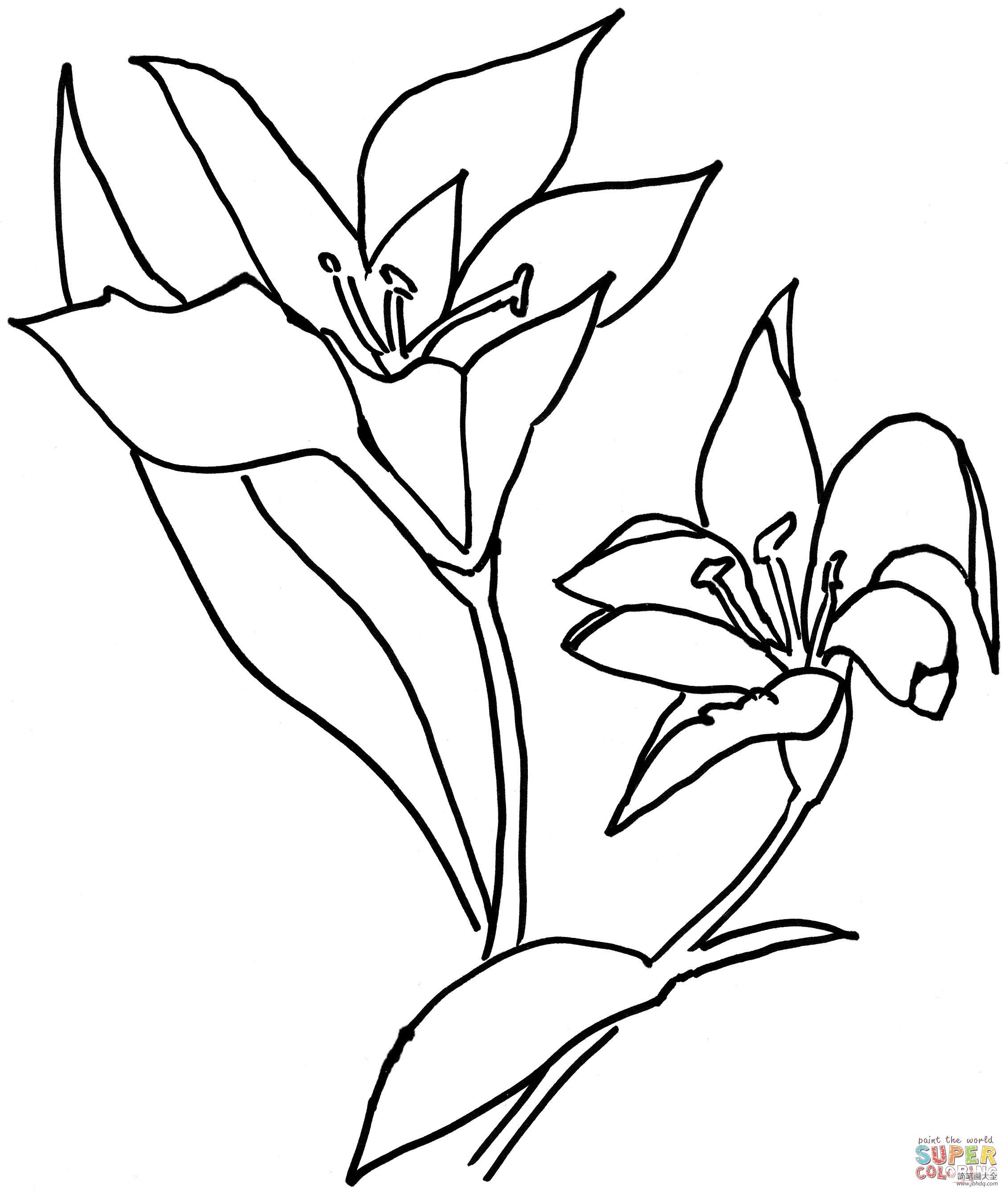 [百合花怎么画简单好看]百合花怎么画