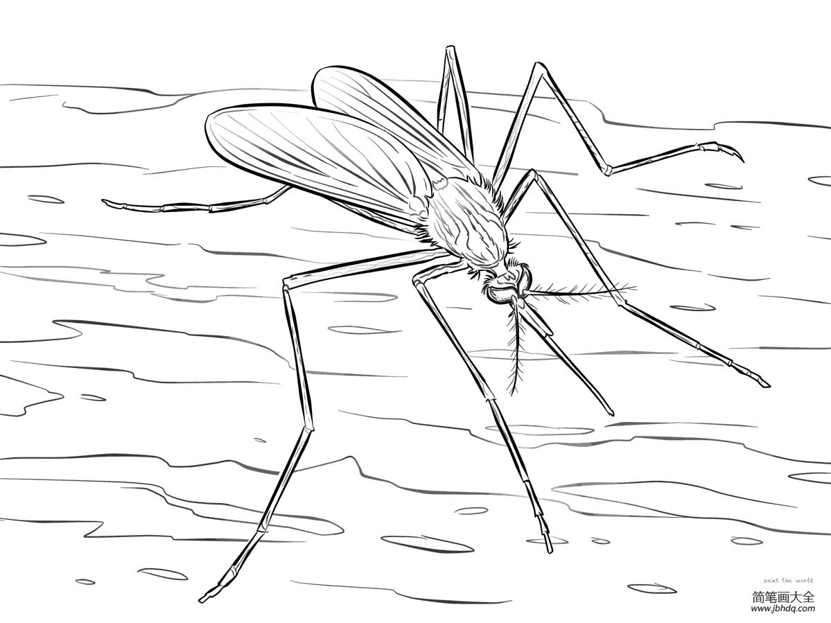 学画奥特曼|学画蚊子