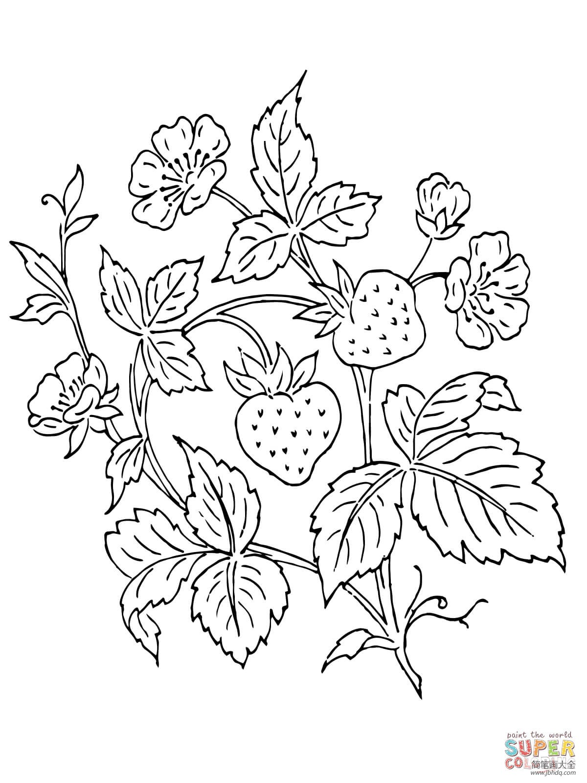 [草莓花图片]草莓和草莓花