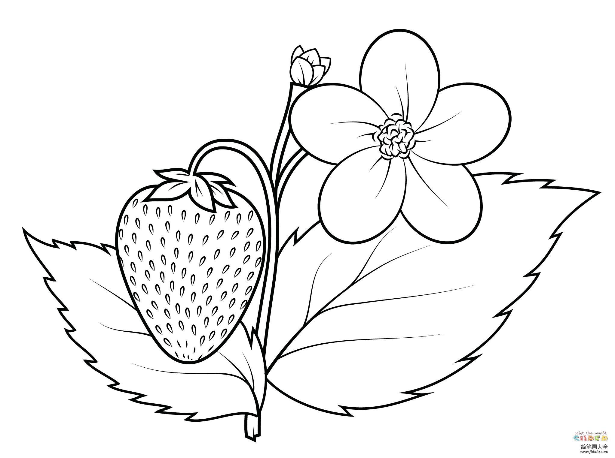 简单的草莓简笔画图片
