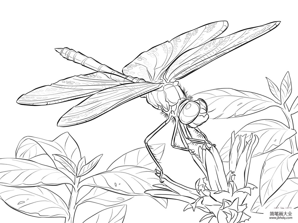 停在花上的蜻蜓