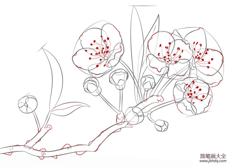 如何画樱花