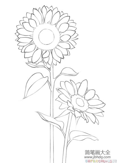 【向日葵怎么画】如何画向日葵
